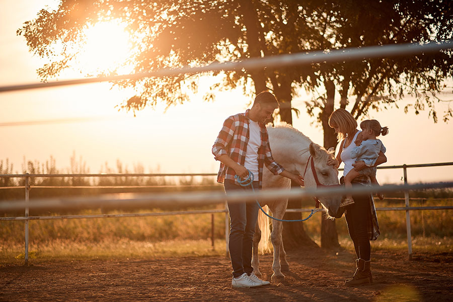 Personal Insurance - Family Playing with a Horse at a Horse Farm at Sunset
